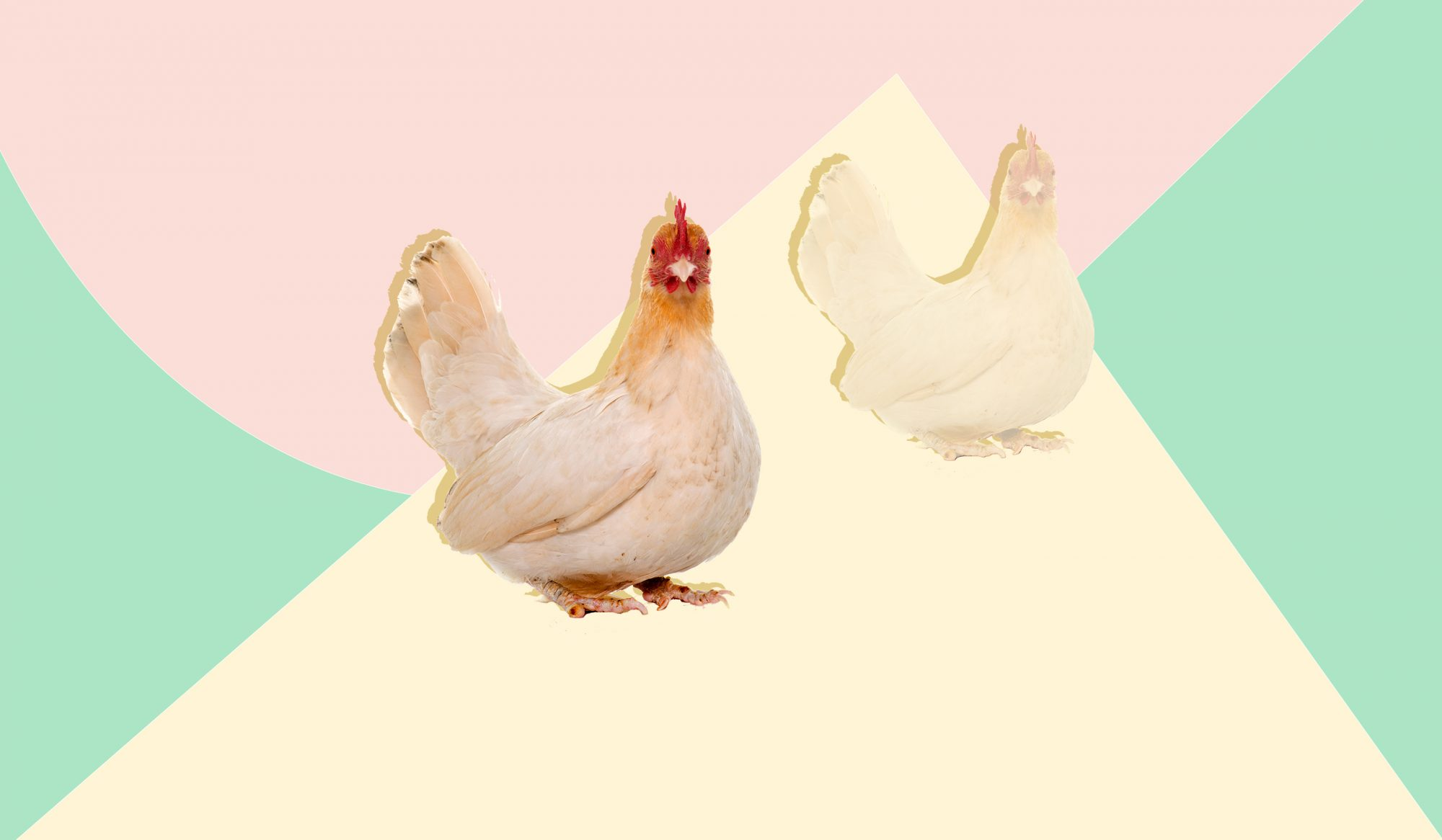 How to Buy the Best Chicken Possible, Despite All the Confusing Packaging Claims