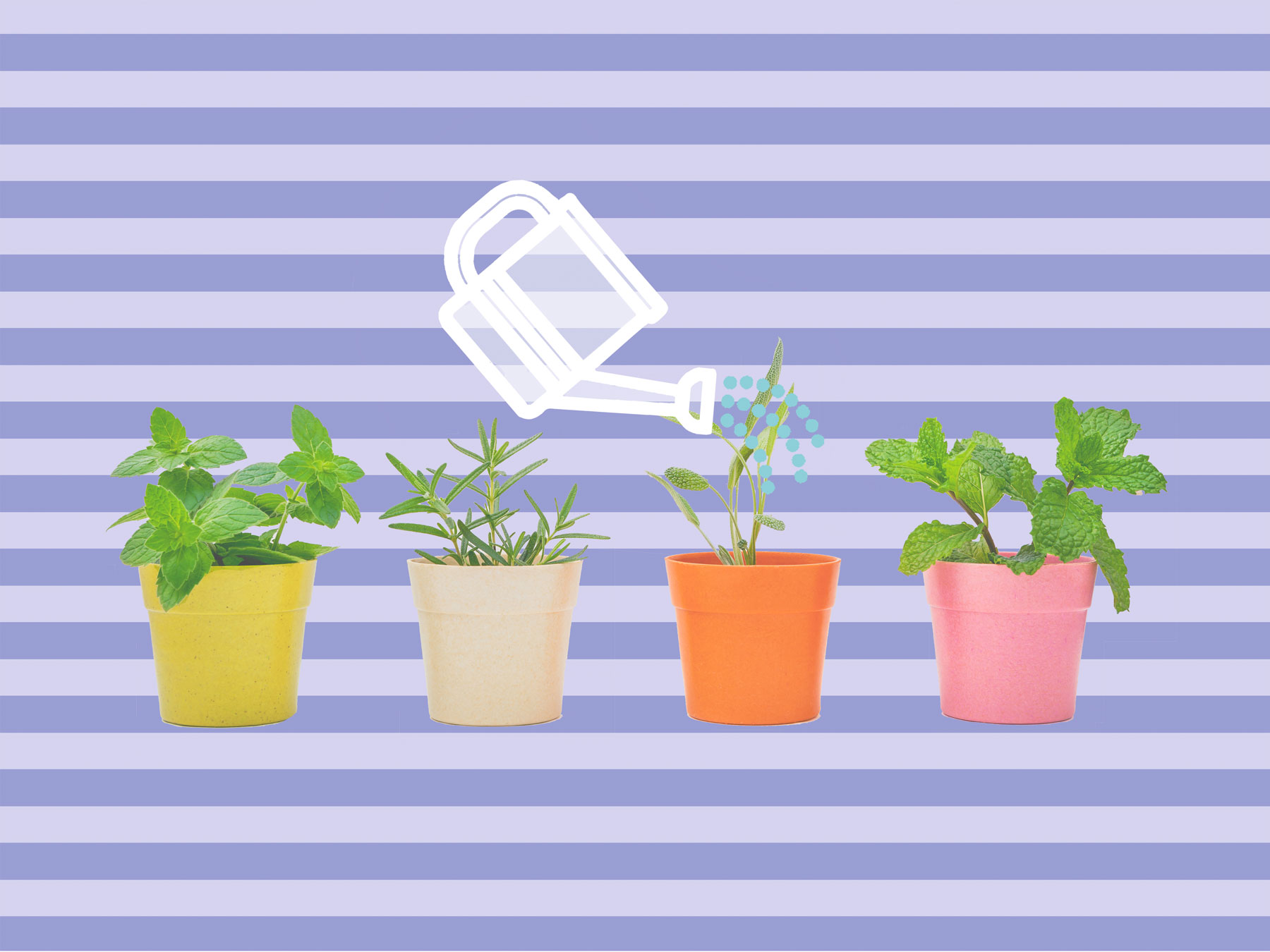 How to water plants - watering plants rules