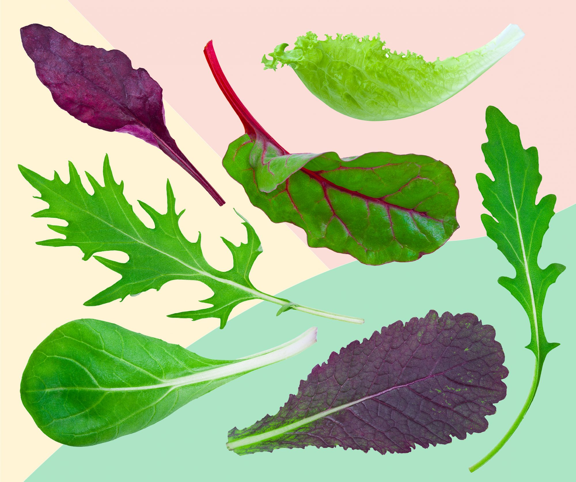 7 Varieties of Lettuce That Will Get You Seriously Excited About Salad