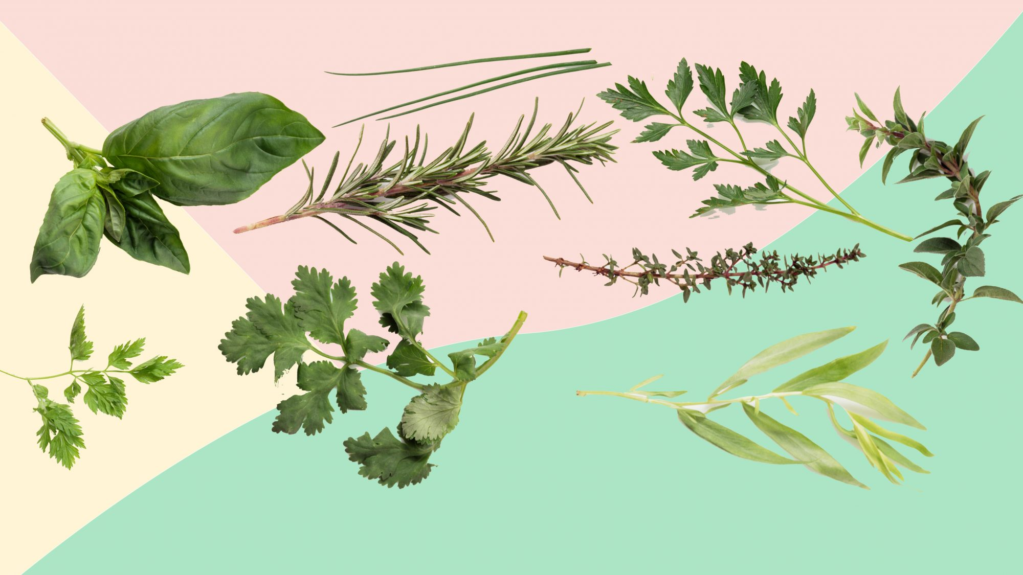 how to slice herbs