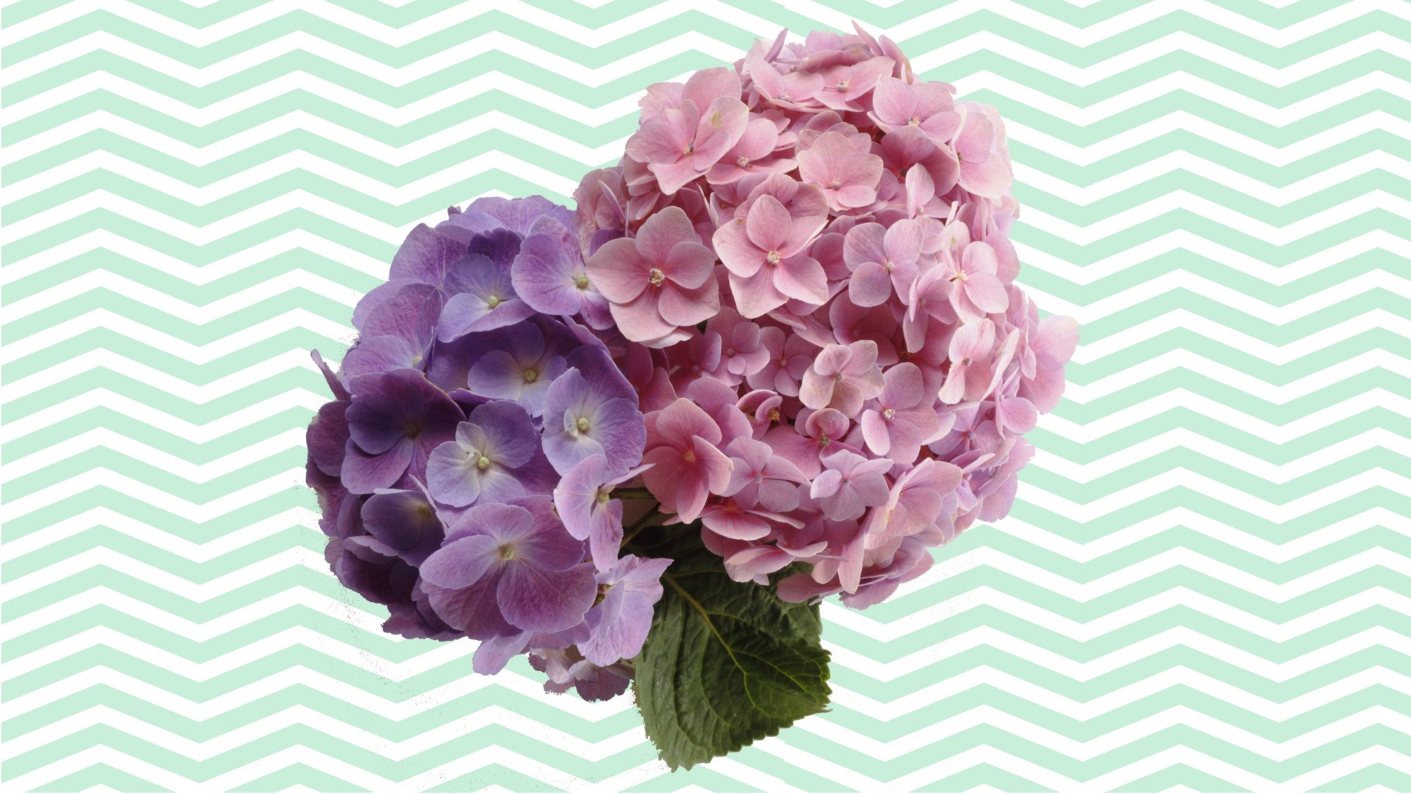 Extend the Life of Hydrangeas With This Florist-Approved Flower Hack