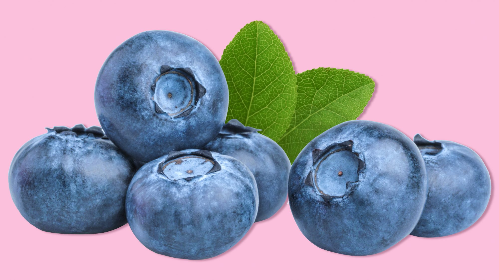 blueberry-gut-health