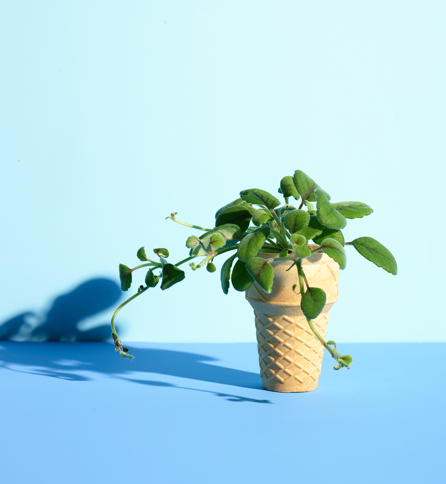 Ice Cream Cone as Seed Starter