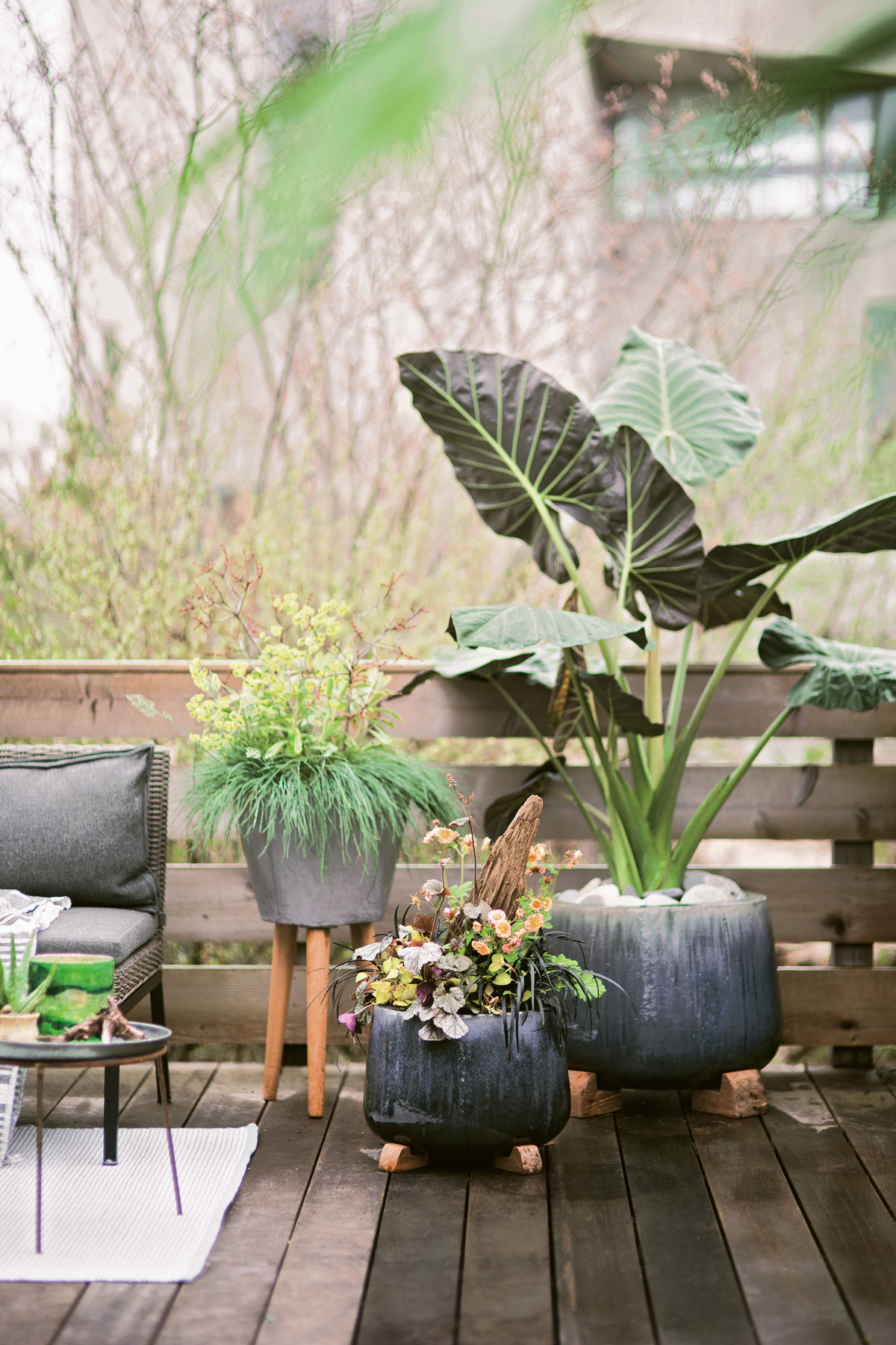 Container gardening ideas and tips - Terrain book excerpt