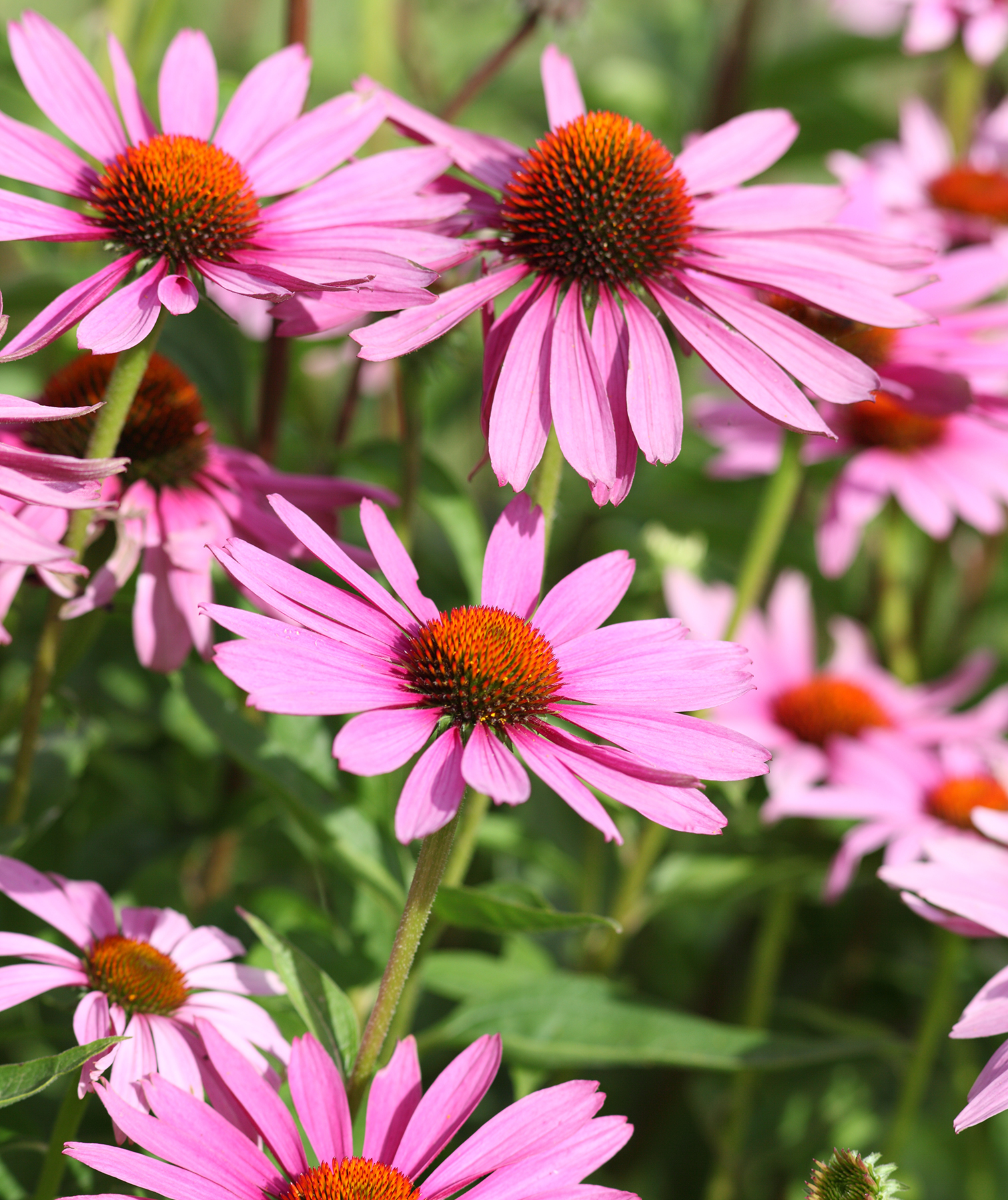 The Best Plants for Your Summer Garden | Real Simple
