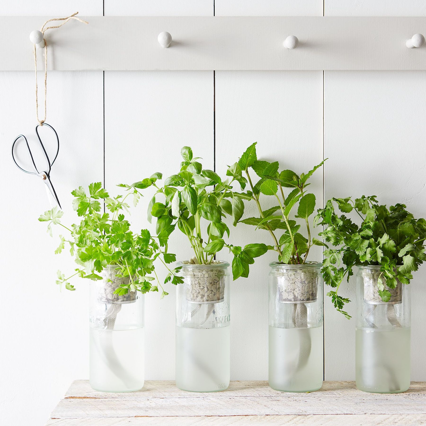 Everything You Need to Start a Low-Maintenance Windowsill Herb Garden