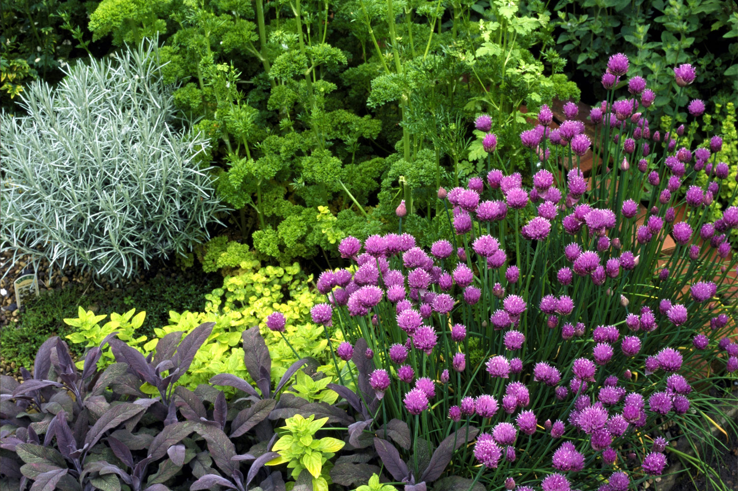 5 Tips to Keep Your Herb Garden Alive