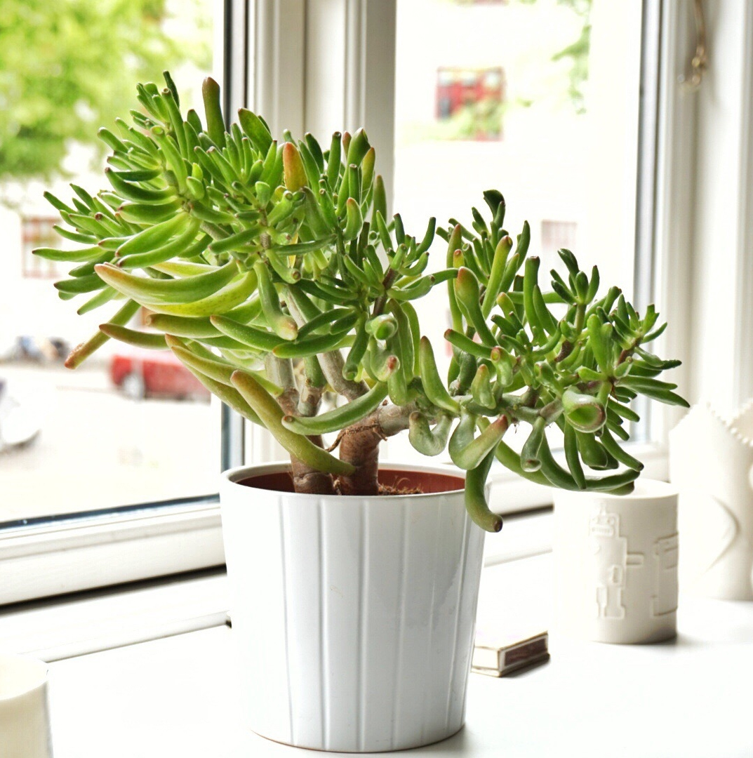 5 Plants That Can Help Purify Indoor Air, According to Science