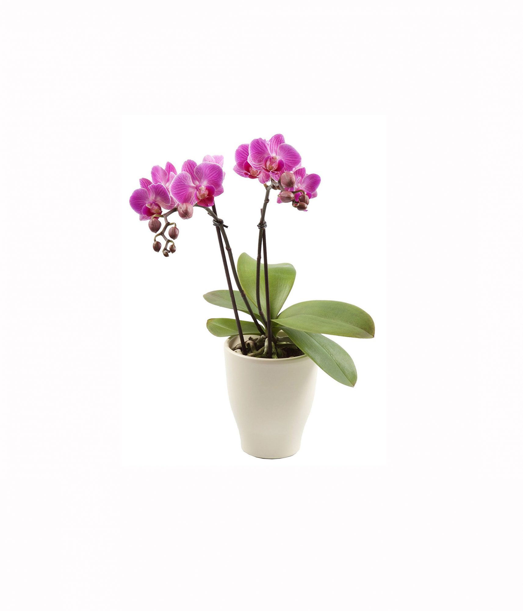 7 Plants You Can Buy on Amazon Right Now