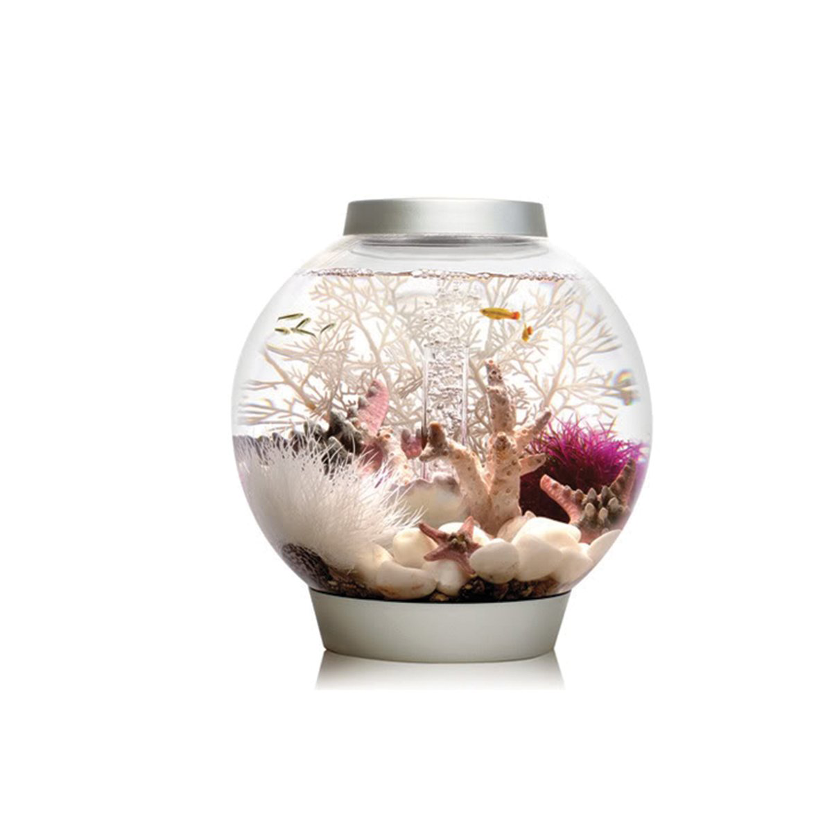 Pet Supply Stores, Fish Aquarium Bowl