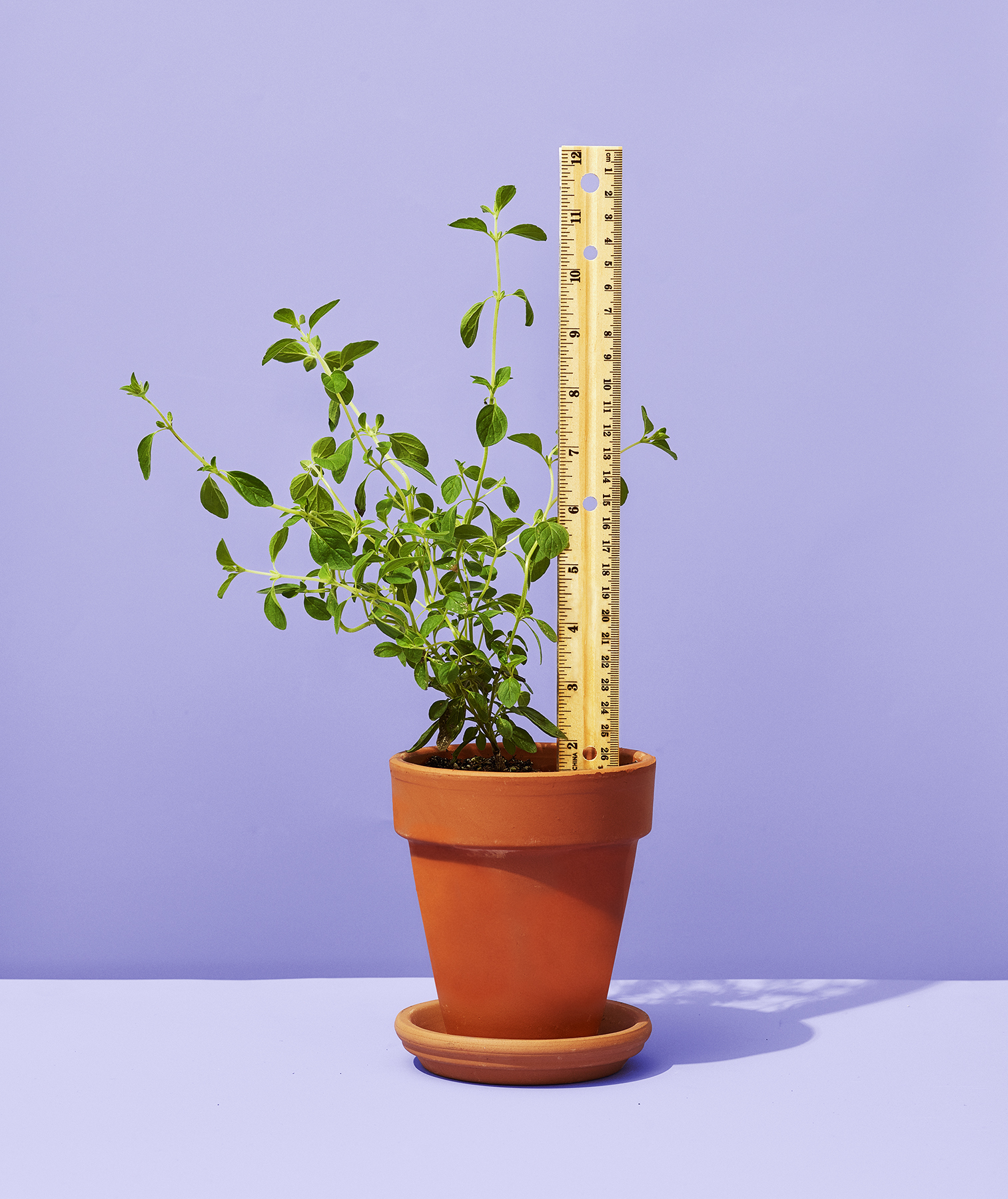 Ruler as Plant Marker
