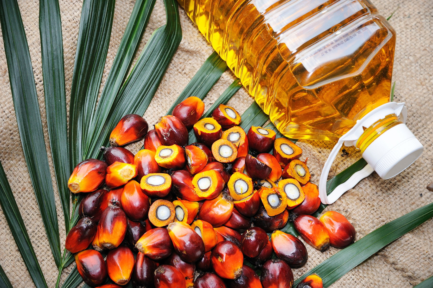 What is palm oil - palm oil fruit and bottle