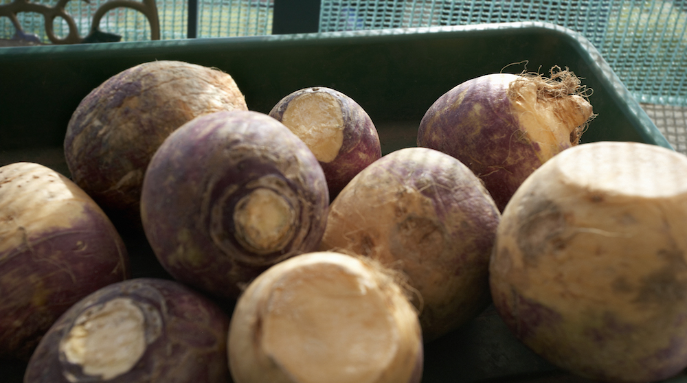 Winter Produce: Rutabagas