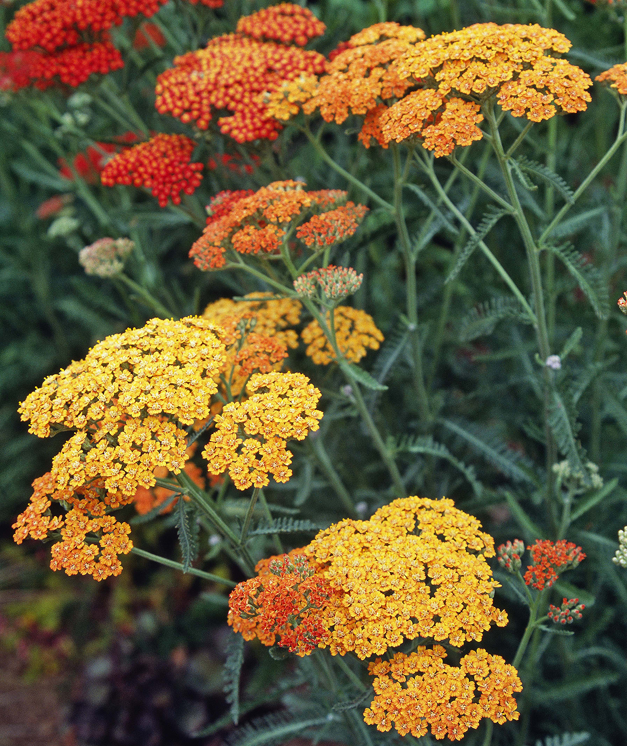 drought-tolerant-plants