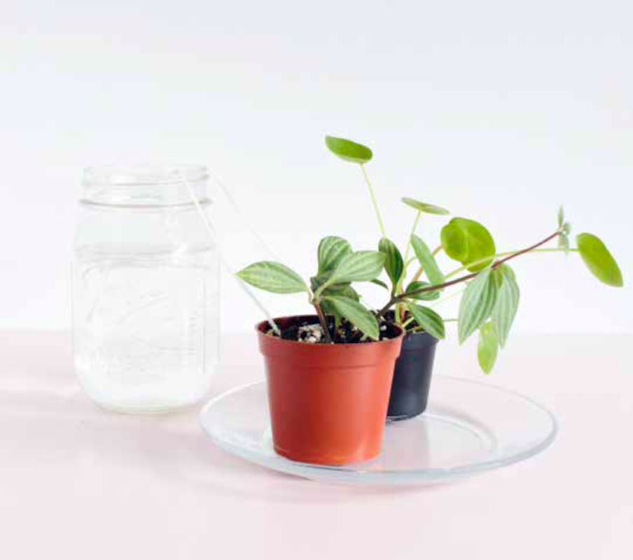 House Plant Yarn Watering Trick, plant with yard and jar of water