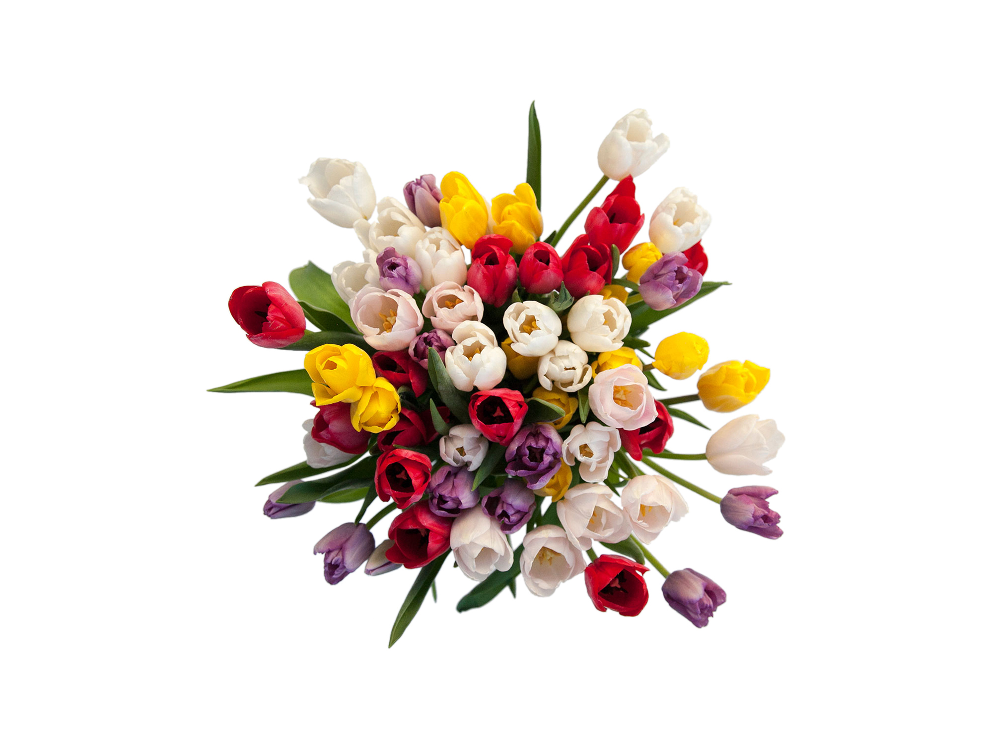 Multi-colored tulip arrangement