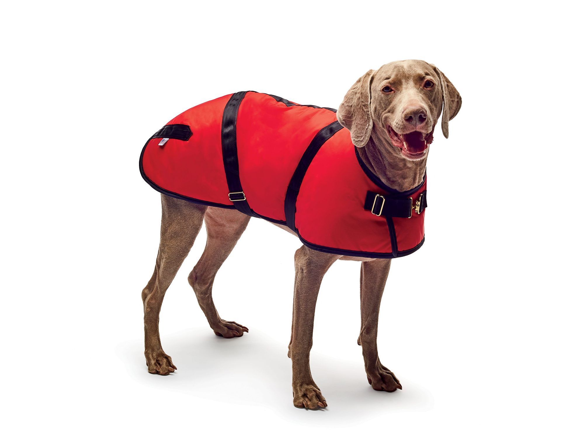 True Fit Dog Coat