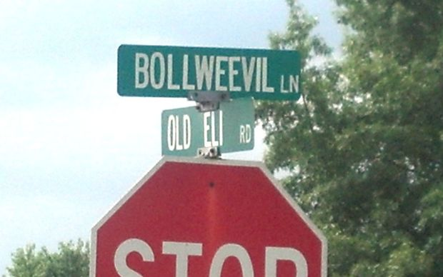 Bollweevil Lane, Old Eli Road: Toney, Alabama