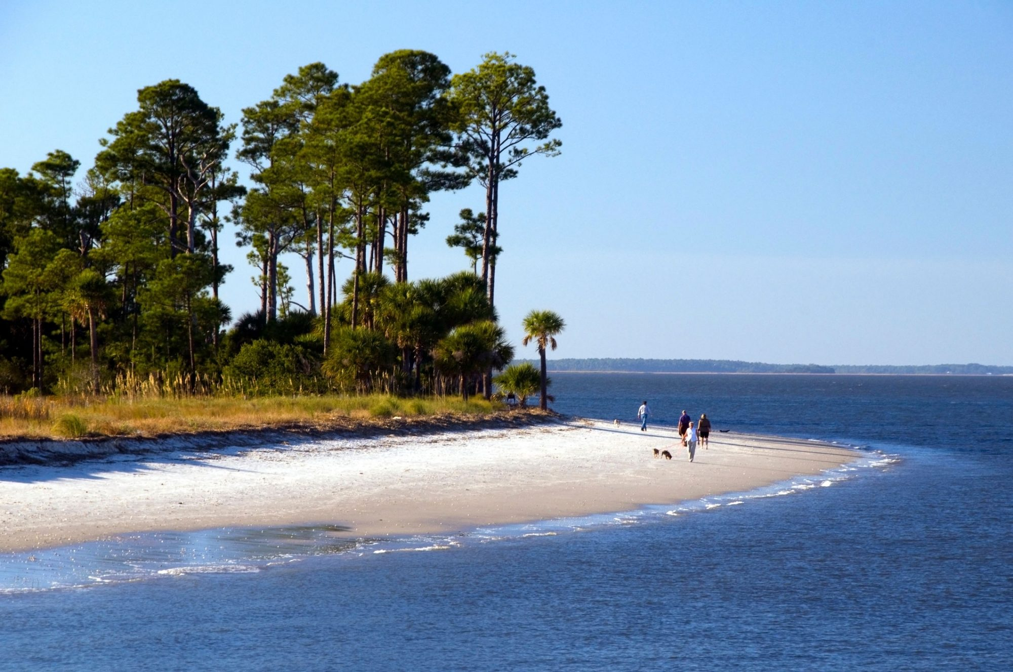 Dolphin Beach at Hilton Head, South Carolina