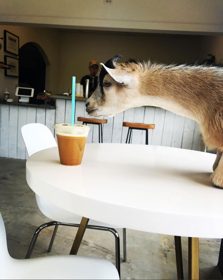 Butters The Goat Civil Coffee