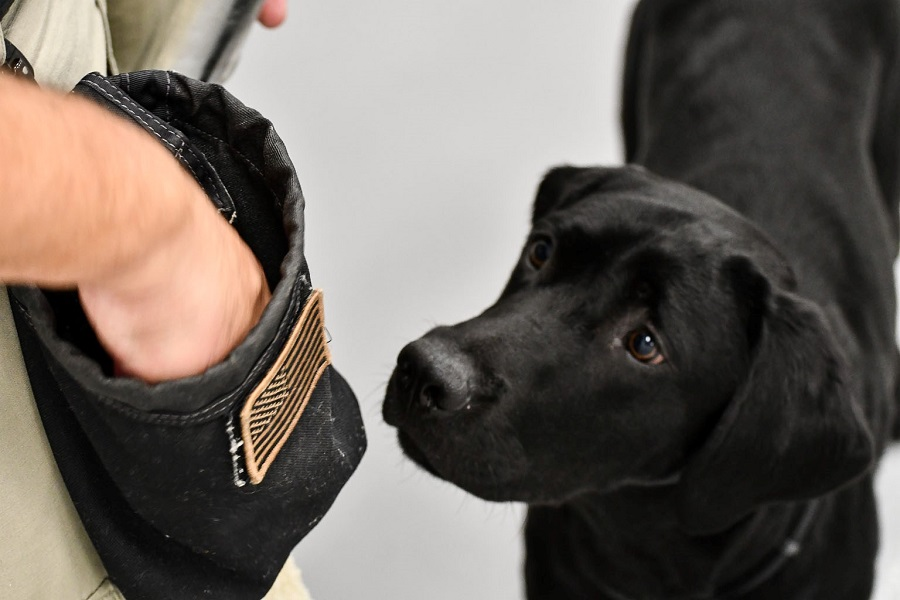 Picture of Harry the CIA Dog
