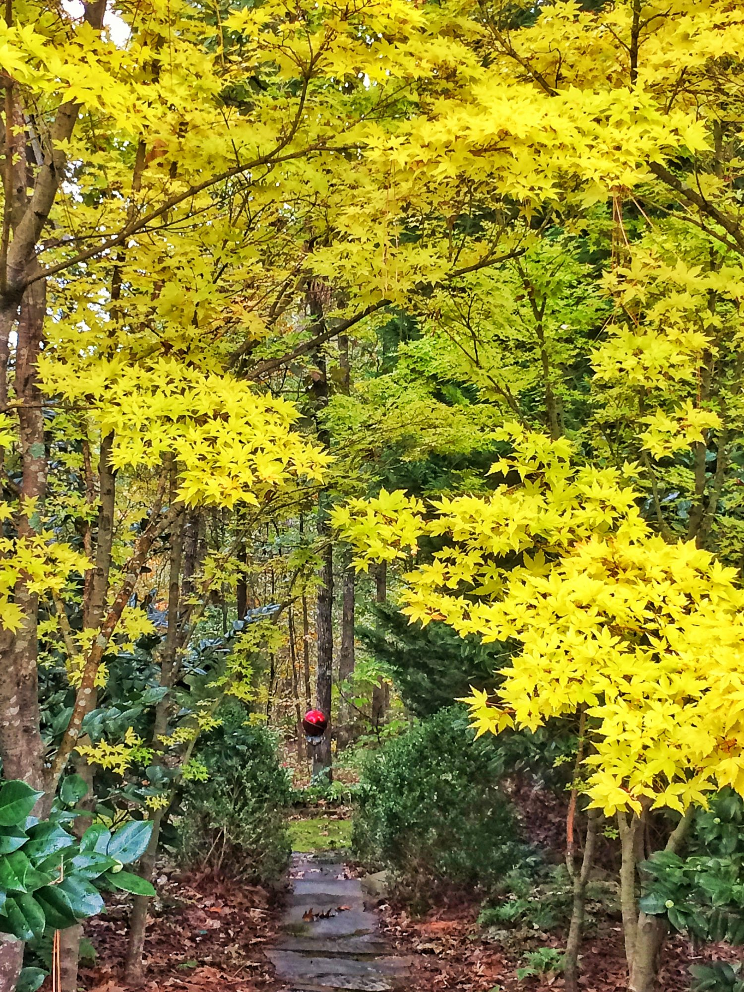 5 Small Trees For Great Fall Color Southern Living