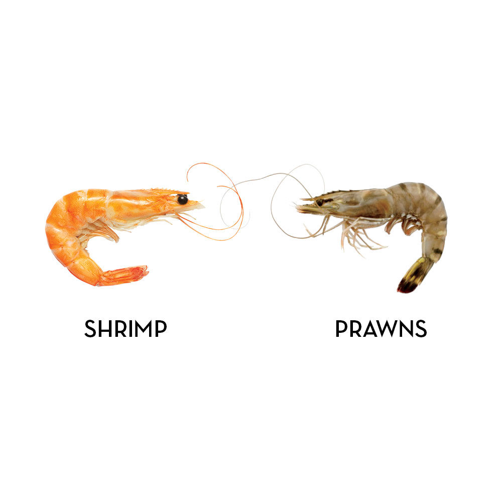 Shrimp generally live in salt water, have claws on two of their legs, and are smaller than prawns, which are usually harvested from freshwater, can be quite large, and have claws on three of their legs.