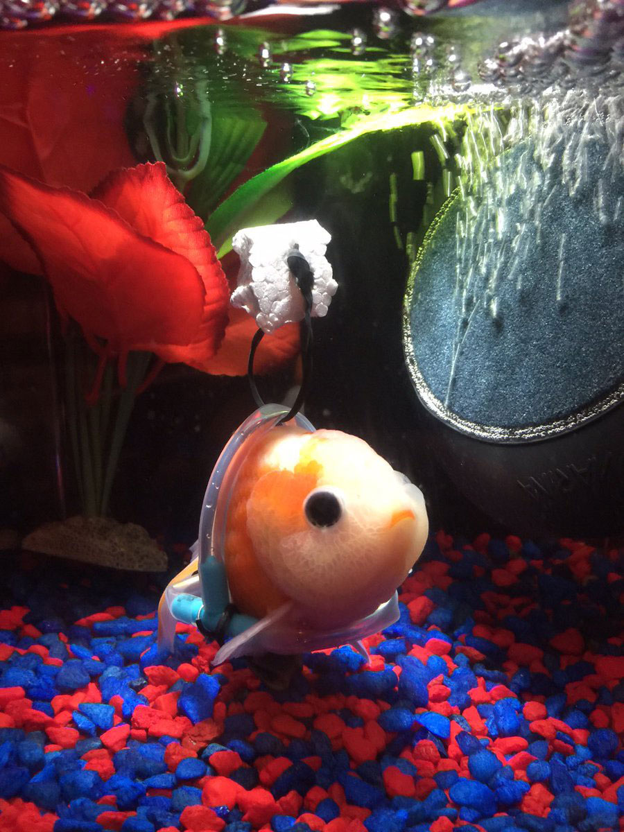 Disabled Fish In Wheelchair