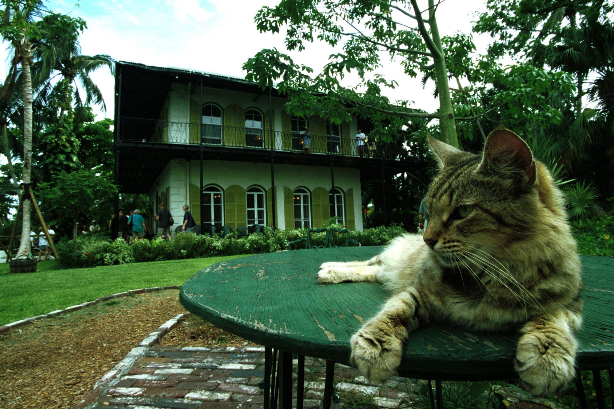 Hemingway cat on a table
