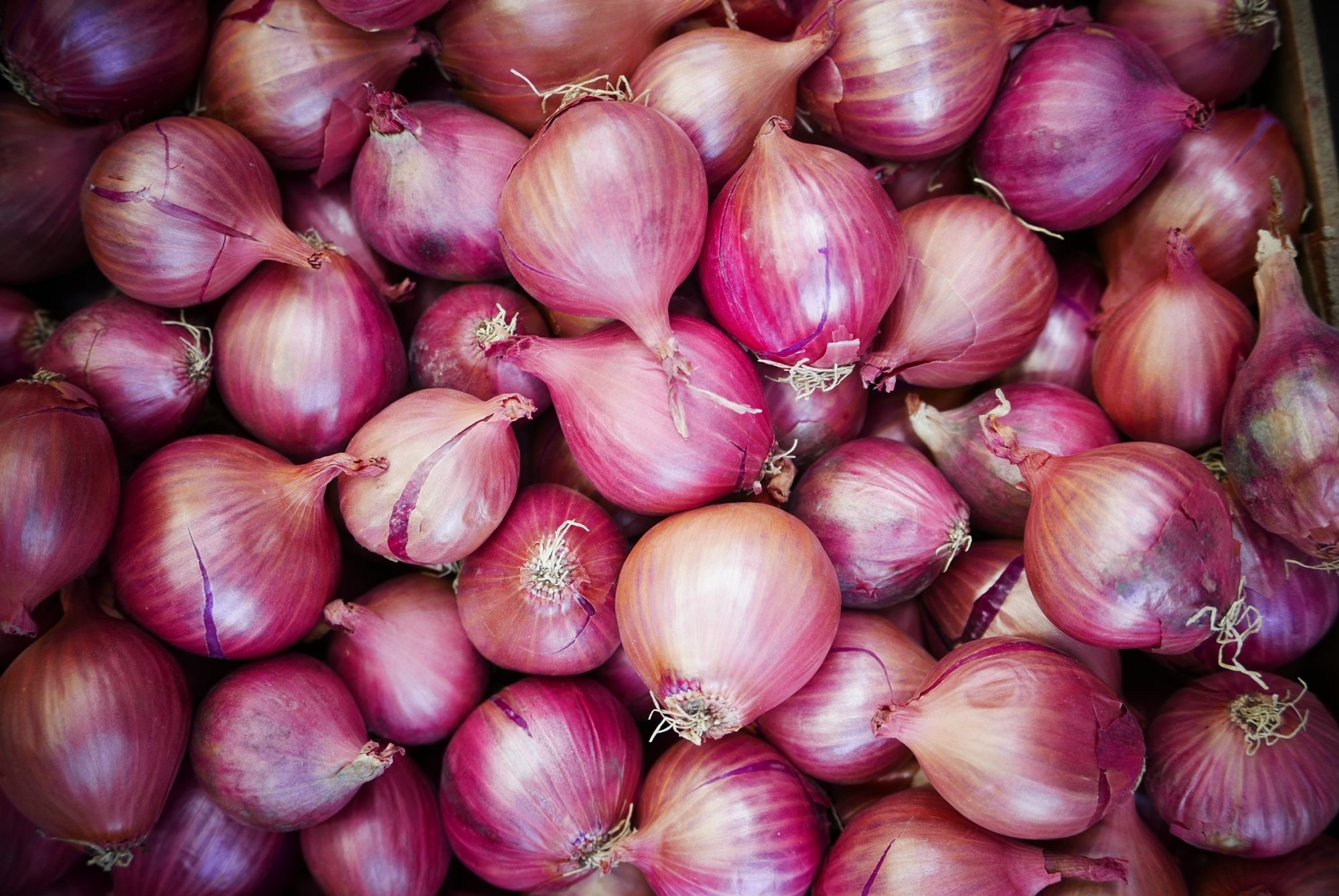Do You Need to Put Onions in the Fridge?