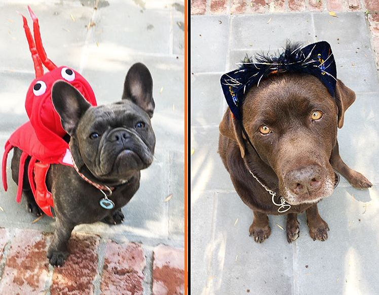 Witherspoon Dogs' Halloween Costumes