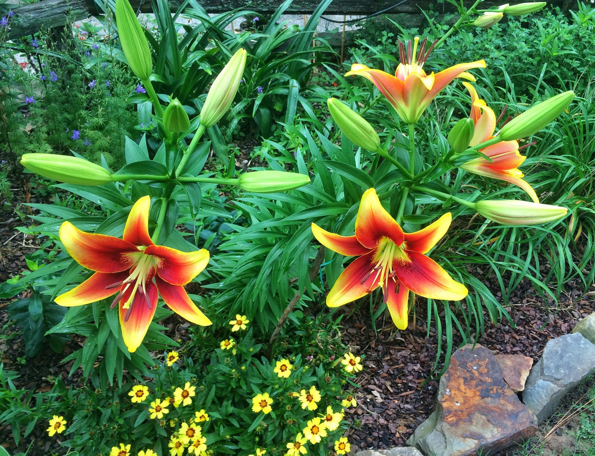 Sumpin important about lilies southern living sumpin important about lilies izmirmasajfo