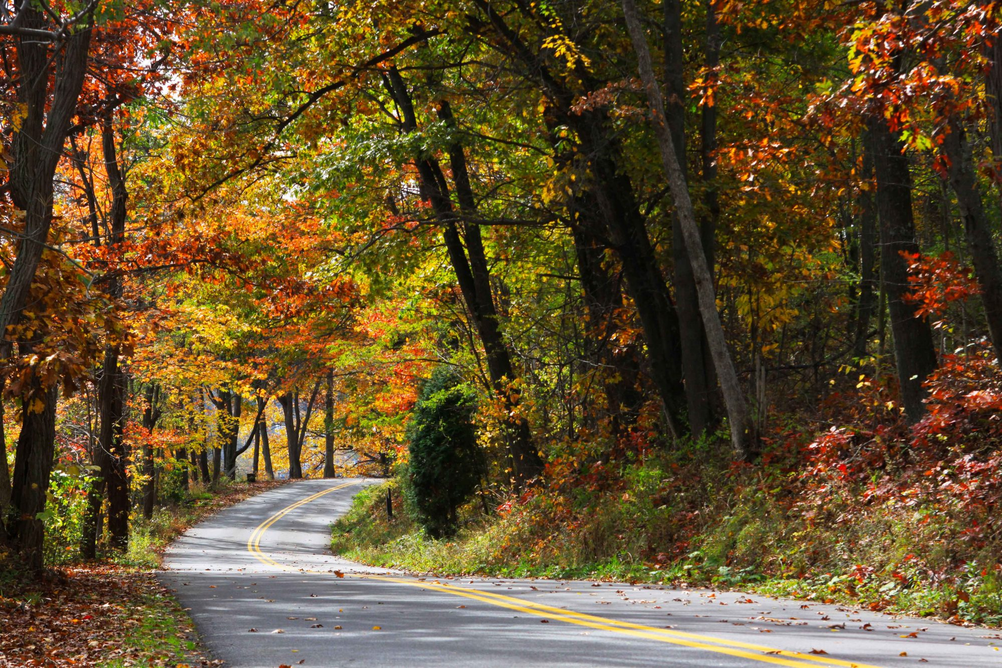 Rock Lodge Road in Garrett County Fall Color