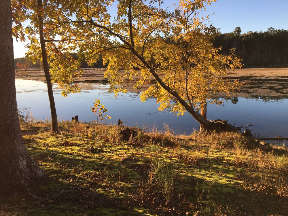 Newport News Park Campsites