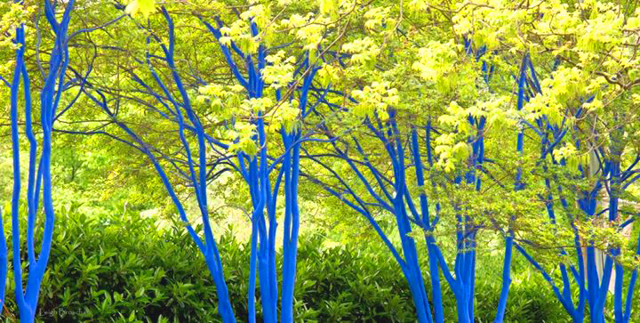 Blue Trees Norcross Ga