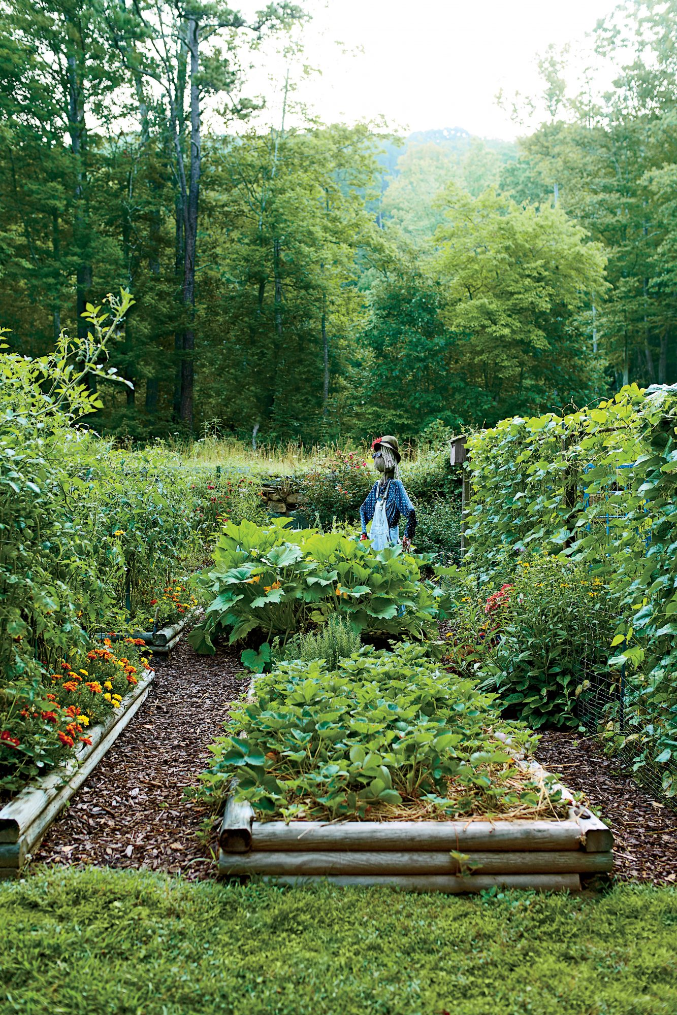 Steal these secrets for growing your own veggie patch southern living for North carolina vegetable gardening