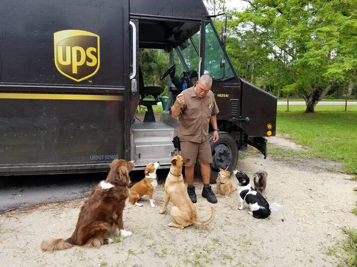 UPS Driver with pack of dog friends