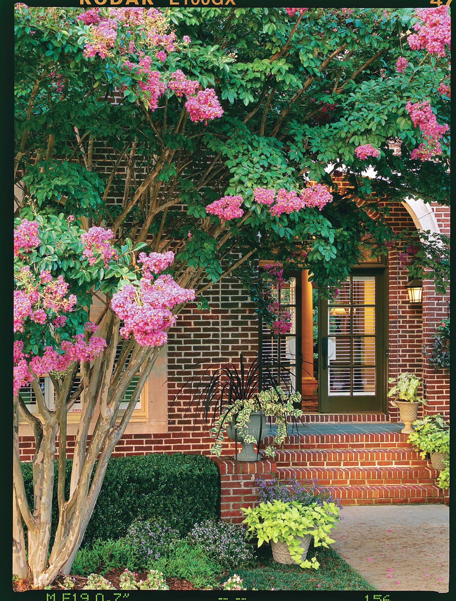 Crepe Myrtles Welcome Summer in the South - Southern Living