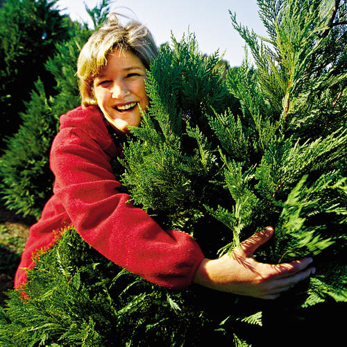 REDESIGN PROMO Start a Tree Cutting Tradition