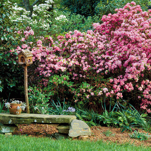Choose the Right Azalea