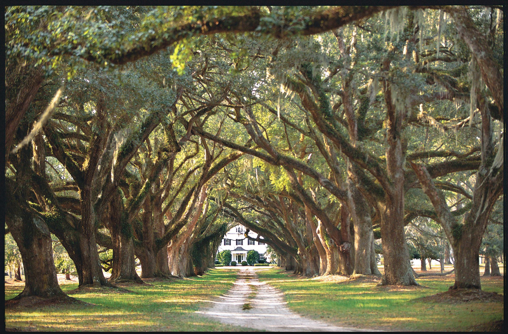 Backroads Guide to Carolina Lowcountry [INFO  OT - How To See the ACE Basin ]