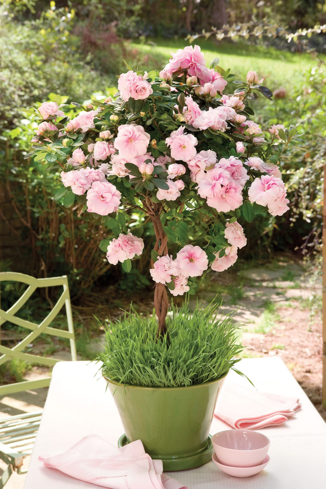 Spring Pink Blooms Southern Living