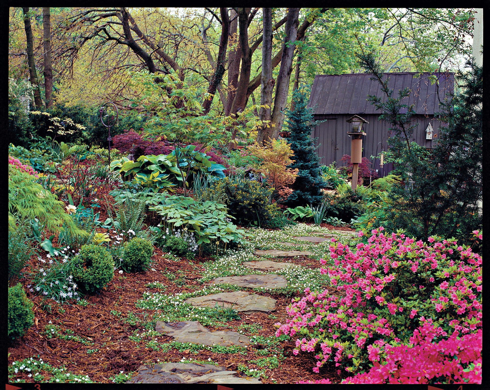 Cottage gardening for everyone southern living for Shrub ideas for garden