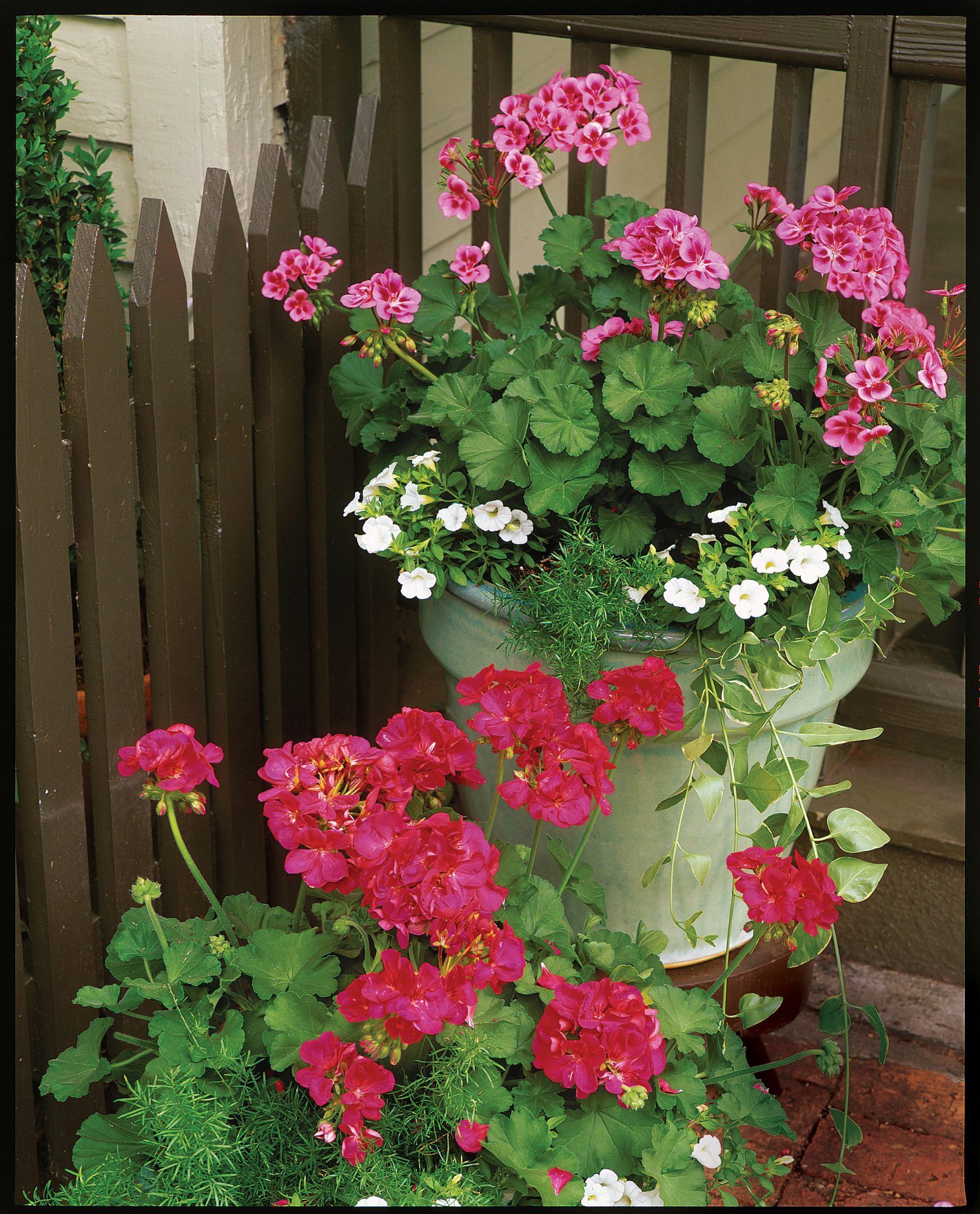 Plant geraniums in containers southern living izmirmasajfo