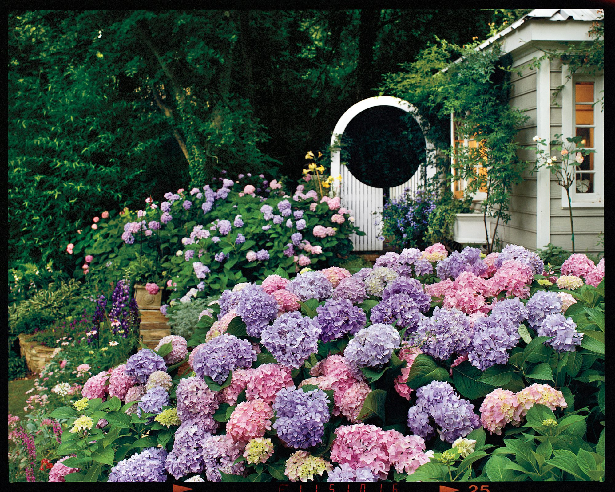 Hydrangea garden: features of planting and plant care 43