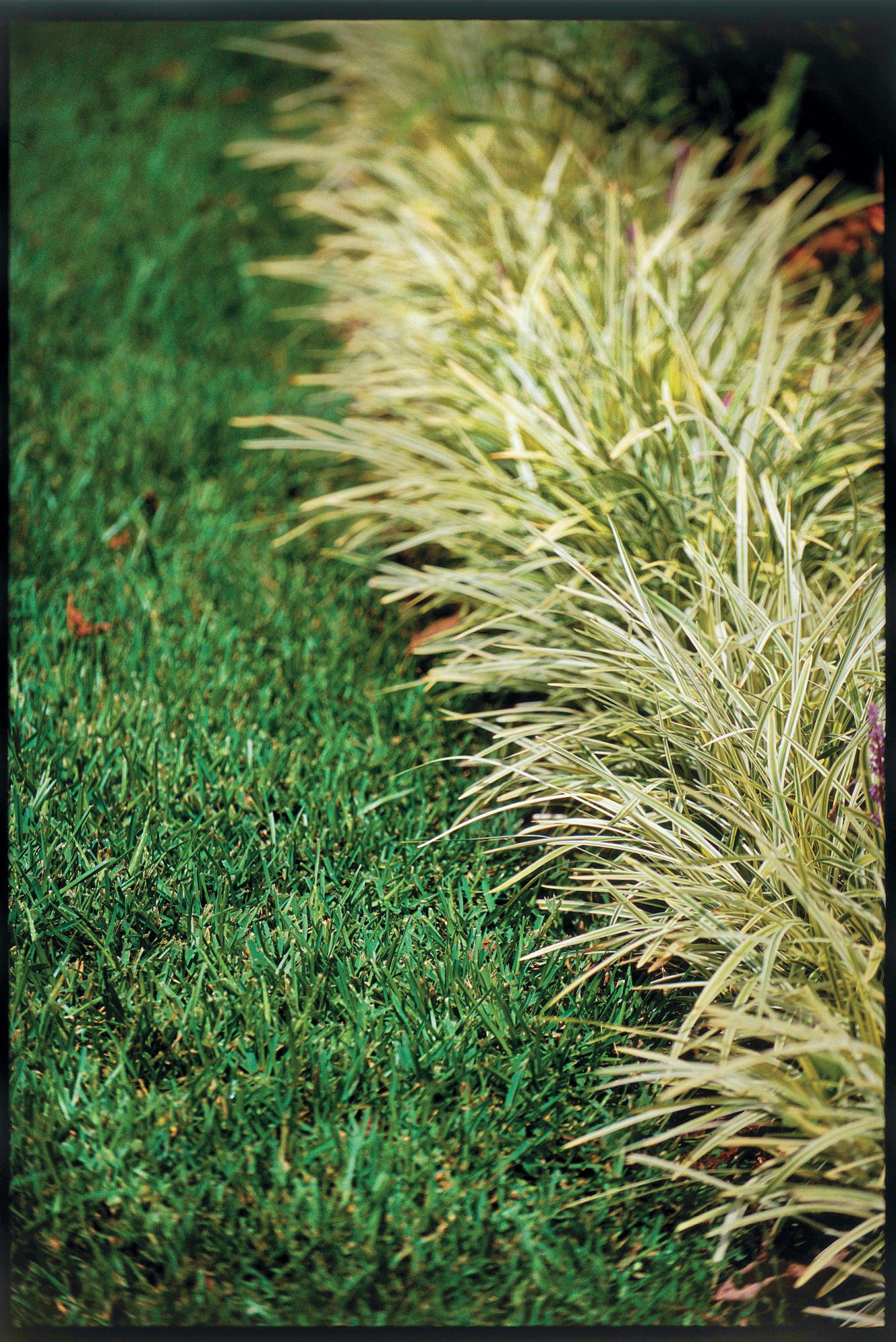 Smart Choices With Monkey Grass