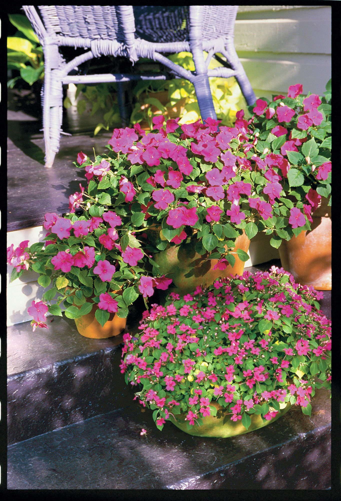 Effortless Annuals Easy To Grow Annual Flowers Southern Living