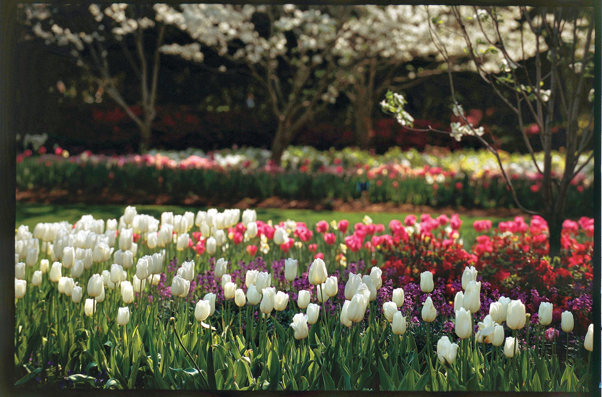 A tulips in texas southern living for Tulip garden in texas