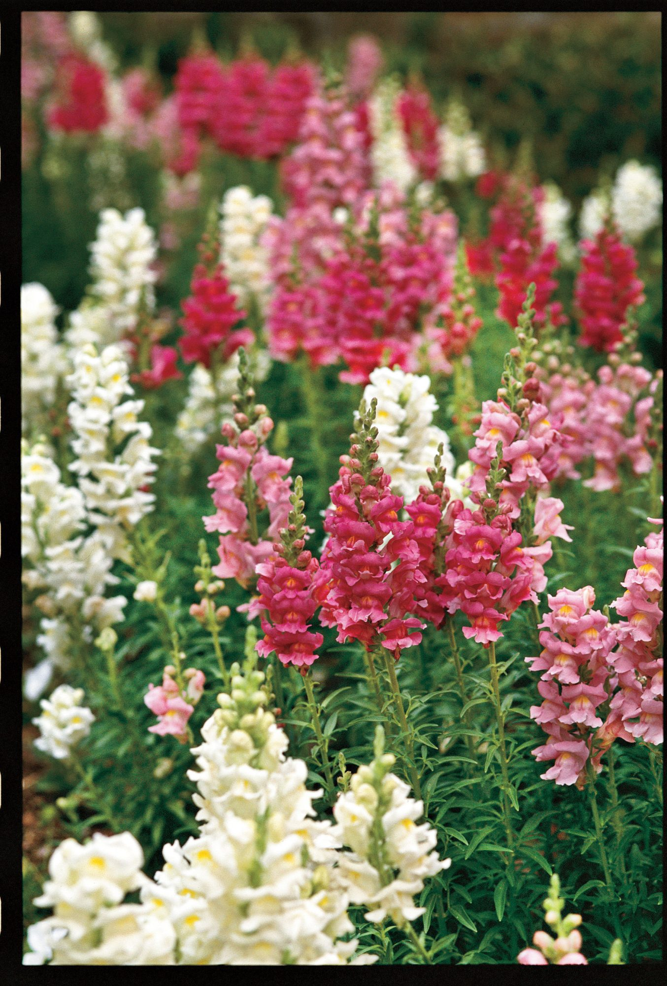 our texas garden editor offers tips and ideas for you