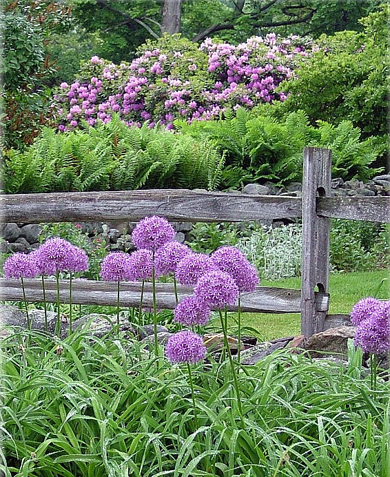 Blooming Onions! Time to Plant Alliums